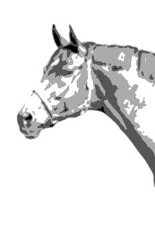 Pferd_grau